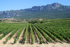 Vineyard in La Rioja. The largest wine producing region in Spain Royalty Free Stock Image