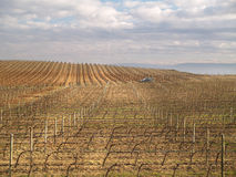Vineyard in La Rioja Stock Photo
