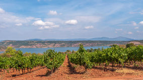 Vineyard at Lac du Salou Herault, France. Vineyard on hillside leading to waterfront in Lac du Salou Herault, France on sunny day stock photo
