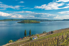Vineyard by the lake of Biel Royalty Free Stock Photography