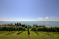 Vineyard at Lake Constance Stock Images