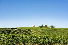 Vineyard on Lake Constance Royalty Free Stock Photo