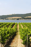 Vineyard and lake in Umbria Stock Photo