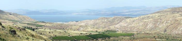 Vineyard and lake royalty free stock photos
