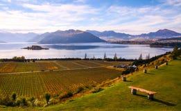 Vineyard and lake Wanaka royalty free stock images