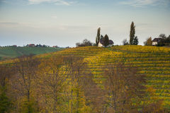 Vineyard landcape. With houses and trees Stock Photo