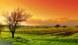 Free Vineyard Landscape Royalty Free Stock Photography - 1300987