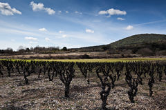 Vineyard landscape. A typical landscape of the south of France, vineyard and blue sky royalty free stock photos