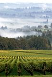 Vineyard Landscape. Rows in a vineyard early in the morning in the fall royalty free stock photography
