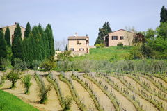 Vineyard landscape. Vineyard, trees, farm houses. Toscana, Italy, EU Stock Image