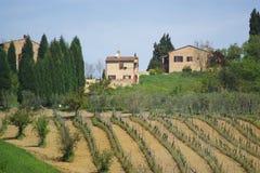 Vineyard landscape. Vineyard, wild field, trees, farm houses. Italy, EU Royalty Free Stock Photos