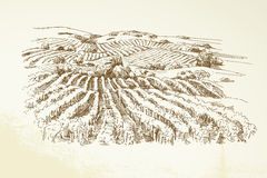 Vineyard Landscape royalty free illustration