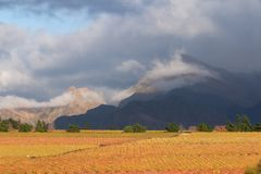 Vineyard  landscape. Landscape of vineyards and mountains, Cape Town area, South Africa Royalty Free Stock Photos