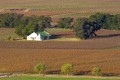 Vineyard landscape. Landscape of vineyards and homestead, Cape Town area, South Africa Stock Photos