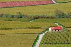 Vineyard landscape. Autumn landscape of vineyards, Cape town area, South Africa Stock Image