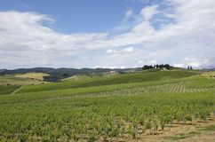 Vineyard Landscape. Tuscany Landscape in Chianti Countryside - Best of Italy stock photo