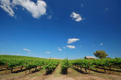 Vineyard Landscape Stock Photo