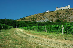 Vineyard. The landscape around Palava , South Moravia,Czech republic.Castle Děvičky (Girls castles Royalty Free Stock Photos