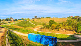 Vineyard landscape as panorama view Royalty Free Stock Photo