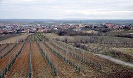 Vineyard and landscape Austria, Europe. Panoramic view, vineyard and landscape Austria, Europe royalty free stock photos