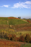 Vineyard landscape in autumn. Vineyard landscape in the fall in the Langhe in Piedmont Stock Image