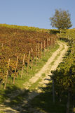 Vineyard landscape in autumn Royalty Free Stock Images