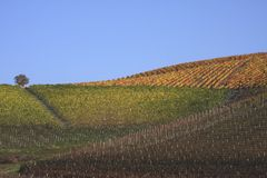 Vineyard landscape in autumn Stock Photos