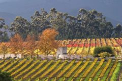 Vineyard Landscape, Cape Town Area, South Africa Stock Photo