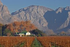 Vineyard Landscape, Cape Town Area, South Africa Royalty Free Stock Photography
