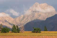 Vineyard landscape, Cape Town area, South Africa. Landscape of vineyards and mountains, Cape Town area, South Africa Royalty Free Stock Photo
