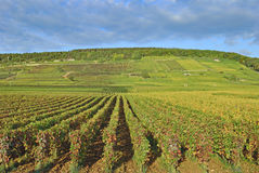 Vineyard Landscape,Chablis,Burgundy,France Royalty Free Stock Image