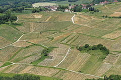 Vineyard landscape in Chateau-Chalon Royalty Free Stock Photo