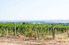 Vineyard landscape Royalty Free Stock Photography