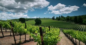 Vineyard Landscape stock video footage