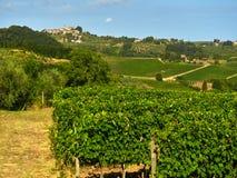 Vineyard Landscape Royalty Free Stock Image