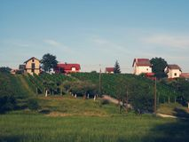 Vineyard landscape hill. Pictured at the beautiful sunny day Royalty Free Stock Image