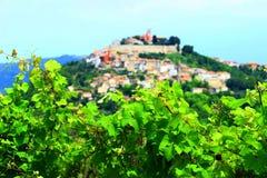 Motovun in Istria, Croatia. Vineyard landscape in Istria, Croatia, town Motovun on the hill in background stock photos