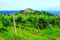 Motovun in Istria, Croatia. Vineyard landscape in Istria, Croatia, town Motovun on the hill in background stock photography