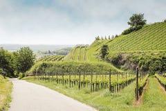 Vineyard landscape in Kaiserstuhl Bischoffingen Baden Württemberg Germany Stock Photo