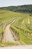 Vineyard landscape in Kaiserstuhl Bischoffingen Baden Württemberg Germany Royalty Free Stock Image