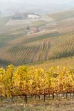 Autumnal landscape of vines and hills in Langhe, Northern Italy Stock Photos