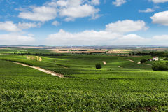 Vineyard landscape, Montagne de Reims, France Royalty Free Stock Image