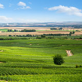 Vineyard landscape, Montagne de Reims, France Royalty Free Stock Photography