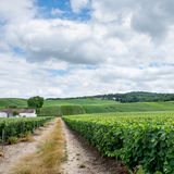 Vineyard landscape, Montagne de Reims Stock Photos