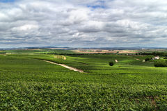 Vineyard landscape, Montagne de Reims Royalty Free Stock Photography