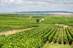 Vineyard landscape, Montagne de Reims Royalty Free Stock Images