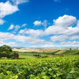Vineyard landscape, Montagne de Reims, France. Vineyard landscape against blue sky, Montagne de Reims, France Stock Images
