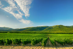 Vineyard. Landscape with vineyard in the mountains royalty free stock photos