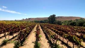 Vineyard landscape at Napa valley stock footage