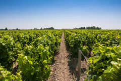 Vineyard landscape near Bordeaux, France Royalty Free Stock Image